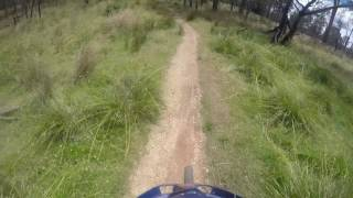 Trevallyn Peppermint Track