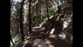 Silvan Forest mtb with Greg B Part 1