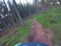Kirkhill - Fallen Trees DH