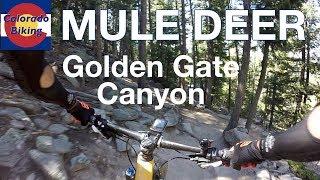 Mule Deer Descent | Mountain Biking at Golden...