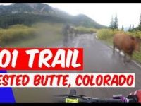 401 TRAIL  |  CRESTED BUTTE, COLORADO