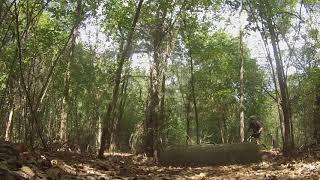 Rowlett Creek Preserve clips