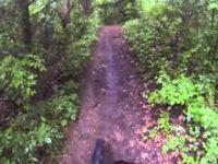 Potawatomi Trail,Pinckney Rec. Area