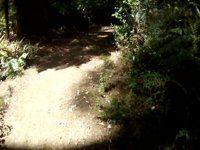 Exit, MTB Trail, Whaka Forest, Rotorua, New...