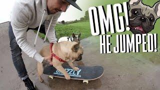 MY DOGS CAN SKATEBOARD!?