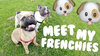 MY FRENCH BULLDOGS!!