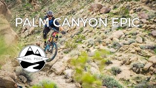 Mountain Biking the Palm Canyon Epic