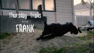 Doggy Downhill with Frank
