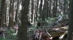 Team Silent Devinci at Cypress Mtn Vancouver, BC