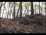 Deer Skull Park V.1