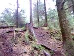 triscombe rock garden trail