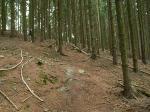 Kluk trail