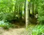 dh dans un bois