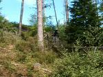 Ladder drop at chipshop tavy woods