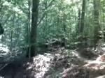 Flowy Downhill section on Wild Turkey
