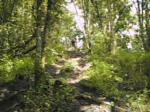 thr forest