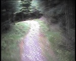 Boundary Trail to Tree