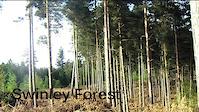 Swinley Forest - Bracknell Edit
