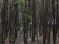 Ksieza Gora fun track 2