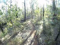 Cat Trail heading north, Part 2.