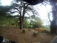 Thringstone Woods