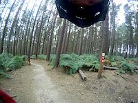Monkey trail, Cannock chase