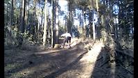 Bovington Woods Trail 1
