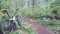 Sword Fern Trail