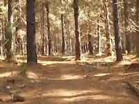 margs whoop whoop trail take 2