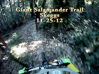 Giant Salamander Trail, Skeggs (11-25-12)