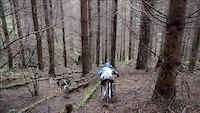The Loamy Forest
