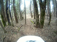 Through the trees, down the dirt, to the rocks.