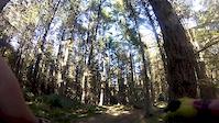 DH3 Grenoside woods
