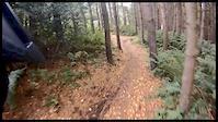 Stainburn Forest edit