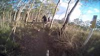 'Banga Bash' mountain bike trail @ Ironbark...