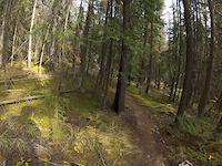 Wood Flow