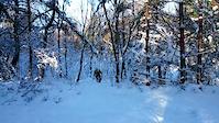Blodiga i snö