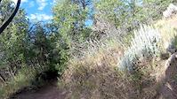 Dutch Hollow Luge Trail