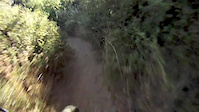 Snake on a Trail