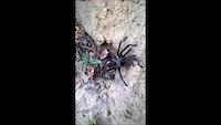 Tarantula!!!