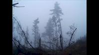 Moist and misty