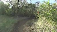 Las Garzas Trail