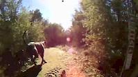 Trail #305