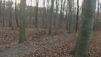 las bukowy 26.12.2015
