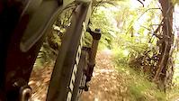 Switchbacks Trail - Oropi Grove