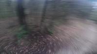 Brigante and Linea Pezzey trails