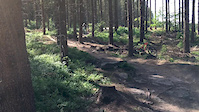 Grenoside Woods
