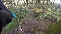 old bird box trail