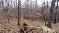 Blue Trail Drops