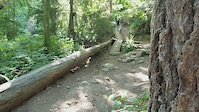 SFU-Nicole's log ride